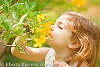 Five senses - smell