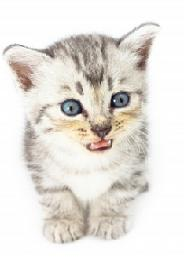 Free Homemade Gift Ideas - Adopt a Pet