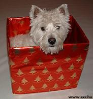 Top 10 Holiday Gifts - Pets